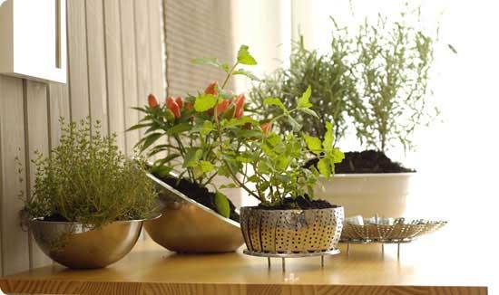 Quais tipos de plantas ter no apartamento f rum da for Plantas hermosas para interiores