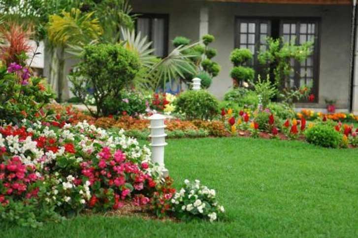 Como escolher plantas para o jardim  Fórum da Construção