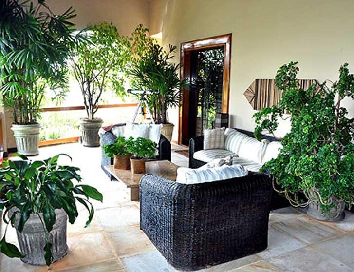 plantas cheirosas jardim:As janelas voltadas para leste tem uma melhor insolação no período